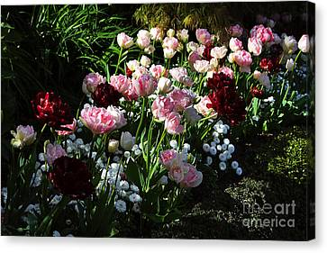 Beautiful Spring Flowers Canvas Print by Louise Heusinkveld