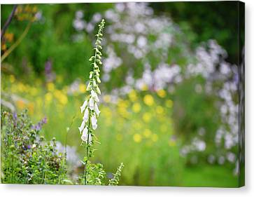 Beautiful Summer Garden Landscape With Beautiful Foxgloves In Fo Canvas Print