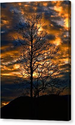Beautiful Sunset Tree Silhouette Canvas Print by Dan Sproul