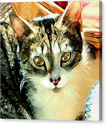 Beautiful Tabby Canvas Print by Elinor Mavor