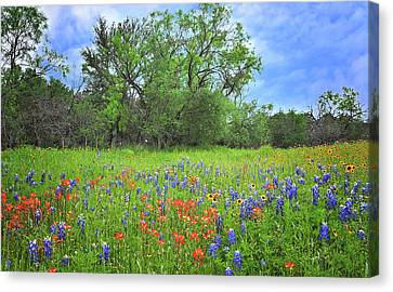 Beautiful Texas Spring Canvas Print