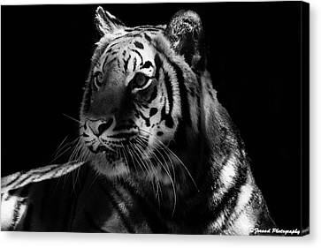 Beautiful Tiger Bw  Canvas Print