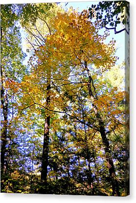 Architecture Canvas Print - Beautiful Trees In The Forest 11 by Lanjee Chee