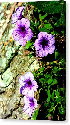 Beautiful Violets Canvas Print