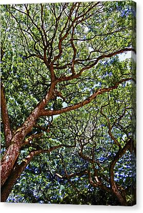 Beautiful Waimea Trees Canvas Print