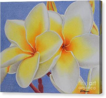 Beautiful White Plumeria Canvas Print by Sharon Patterson