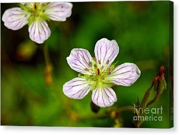 Beautiful Wild Flower Canvas Print by Mario Brenes Simon