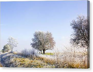 Beautiful Winter Background With Snow Tipped Trees Canvas Print by Jorgo Photography - Wall Art Gallery
