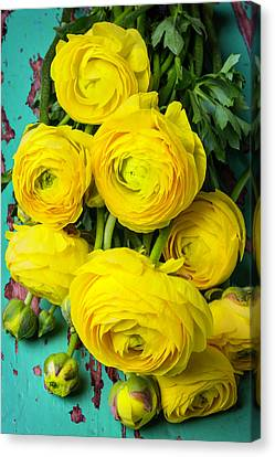 Beautiful Yellow Ranunculus Canvas Print by Garry Gay