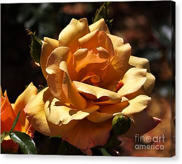 Beautiful Yellow Rose Belle Epoque Canvas Print by Louise Heusinkveld