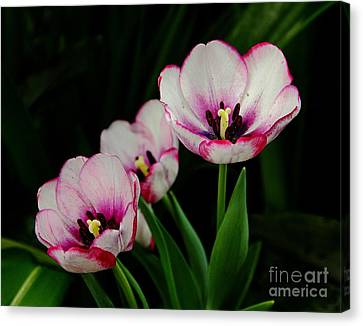 Beauty Abounds Canvas Print