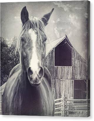 Beauty And The Barn Canvas Print by Barbara Hymer