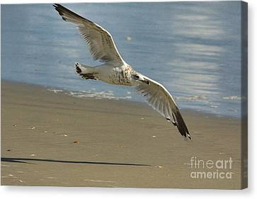 Beauty At The Beach Canvas Print by Deborah Benoit