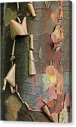 Bark Design Canvas Print - Beauty In Bark by Jessica Jenney