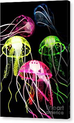 Medusa Canvas Print - Beauty In Black Seas by Jorgo Photography - Wall Art Gallery