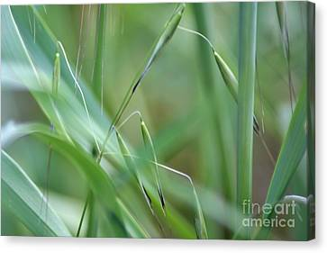 Beauty In Simplicity Canvas Print by Sheila Ping