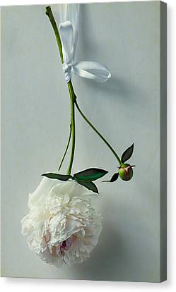 Beauty In Suspension Canvas Print by Maggie Terlecki