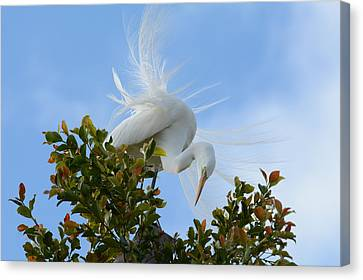 Canvas Print featuring the photograph Beauty In The Treetop by Fraida Gutovich