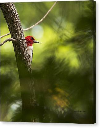 Beauty In The Woods Canvas Print