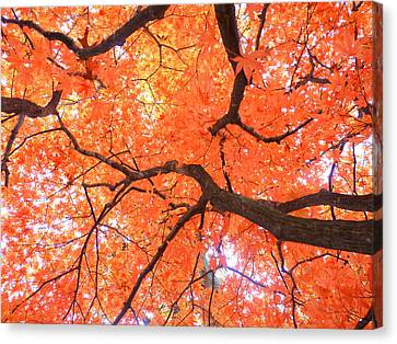 Beauty Of Fall Canvas Print by Elizabeth