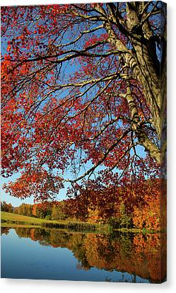 Canvas Print featuring the photograph Beauty Of Fall by Karol Livote