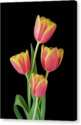 Beauty Of Four Canvas Print