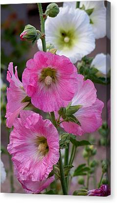 Canvas Print featuring the photograph Beauty Of Hollyhocks by Jeanette Oberholtzer