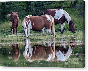 Beauty Of Horses 1 Canvas Print