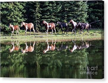 Beauty Of Horses 2 Canvas Print