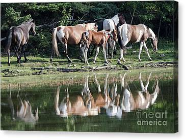 Beauty Of Horses 3 Canvas Print