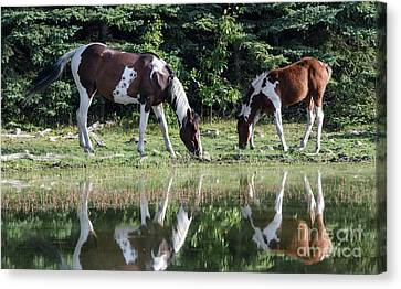 Beauty Of Horses 4 Canvas Print