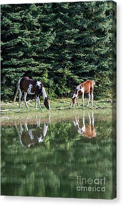 Beauty Of Horses 5 Canvas Print