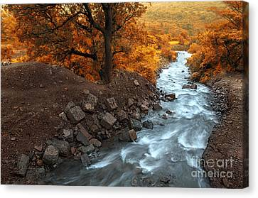 Beauty Of The Nature Canvas Print by Charuhas Images