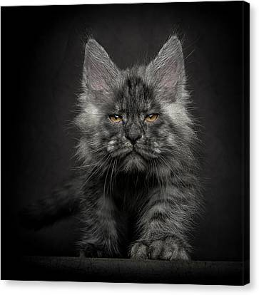 Canvas Print featuring the photograph Beauty Or Beast by Robert Sijka
