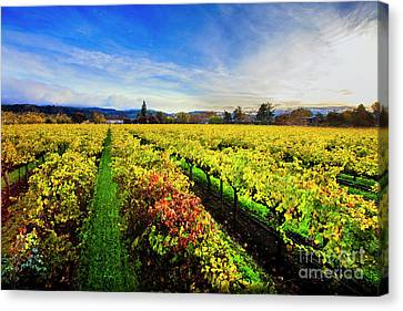 Beauty Over The Vineyard Canvas Print by Jon Neidert