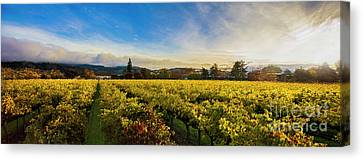 Grape Vines Canvas Print - Beauty Over The Vineyard Panoramic by Jon Neidert