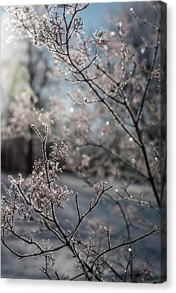 Beauty Within Canvas Print