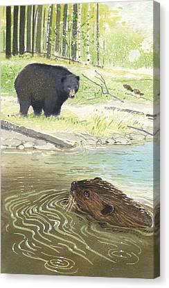 Beaver Canvas Print by Denny Bond