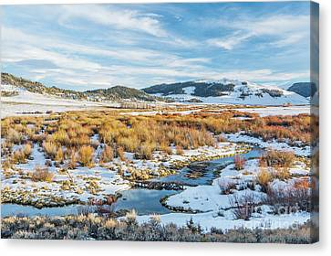 beaver swamp in Rocky Mountains Canvas Print