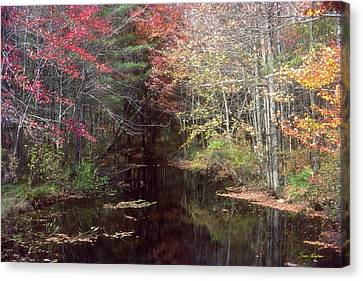 Framing Canvas Print - Beaver's Haunt by Bruce Thompson