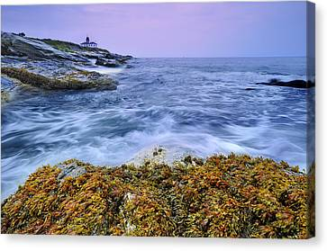 Beavertail Lighthouse, Jamestown, Rhode Island Canvas Print by Shobeir Ansari