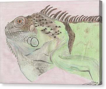 Beavis The Iguana Canvas Print by Joanna Aud