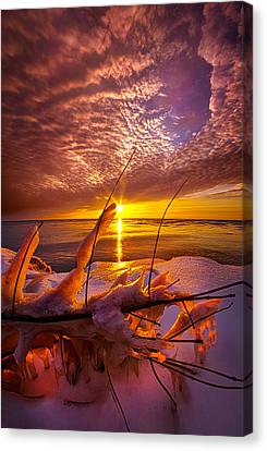 Became Entwined Canvas Print by Phil Koch
