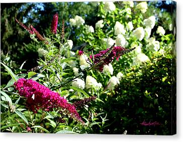 Beckoning Butterfly Bush Canvas Print