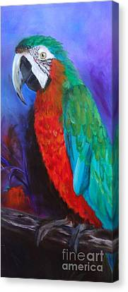 Becky The Macaw Canvas Print by Jenny Lee