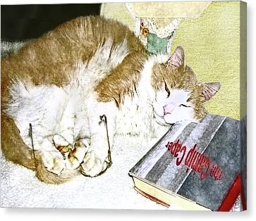 Bedtime Cat Canvas Print by Susan Leggett