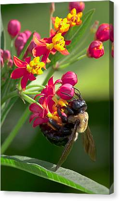 Bee And Flowers Canvas Print by E Mac MacKay
