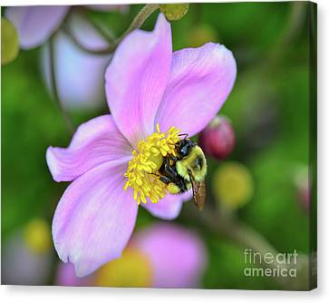 Canvas Print featuring the photograph Bee And Japanese Anemone by Kerri Farley