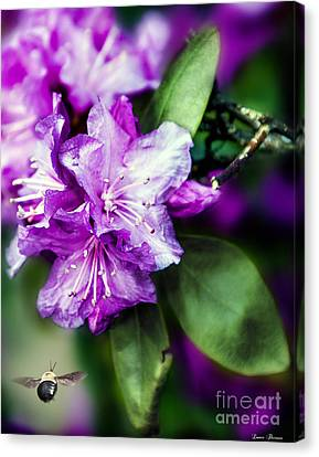 Flowerrs Canvas Print - Bee And Rhododendron In Spring by Lance Theroux