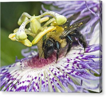 Canvas Print featuring the photograph Bee At Work by Alan Raasch